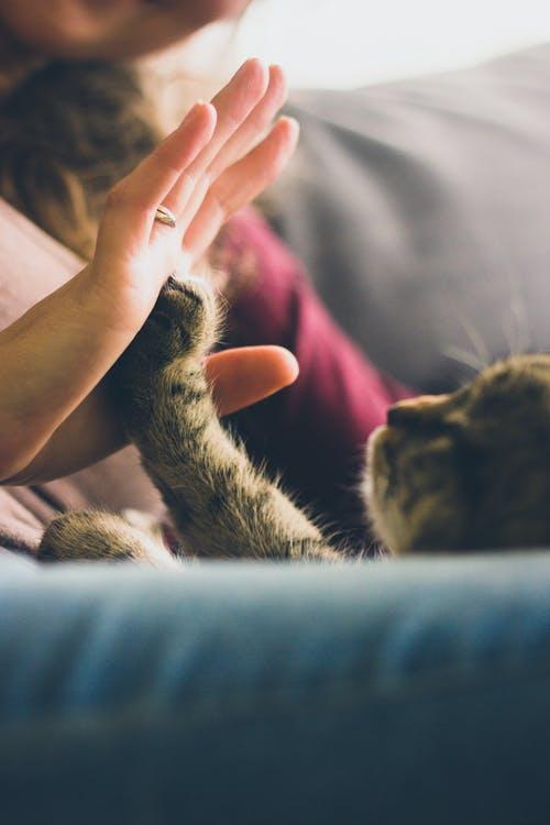 adoptii animale